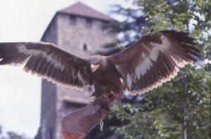 Pflegezentrum für Vogelfauna mit Flugvorführungen